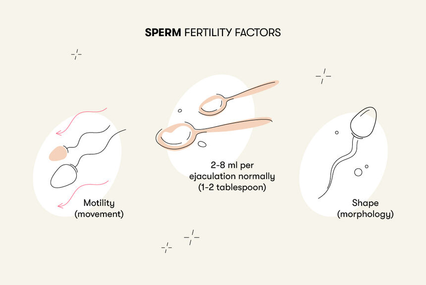 Much is how precum sperm in *MUST READ*